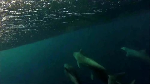 Underwater camera captures dolphins in action