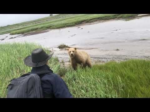 Grizzly Bear Delivers Terrifying Bluff Charge To A Group Of Tourists In Alaska