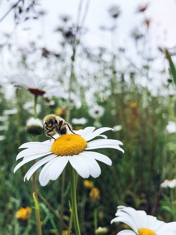 It's World Bee Day! What Everyone Should Know About These Important Pollinators
