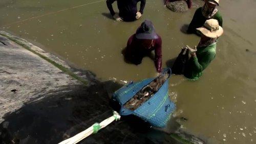 Vietnam leverages climate change to boost shrimp