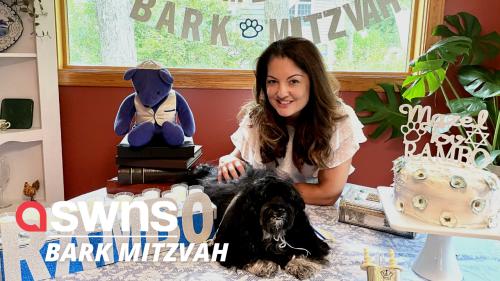 Family throw their dog a Bar Mitzvah - with a kippah, Torah scroll and 'Mazel Tov' CAKE