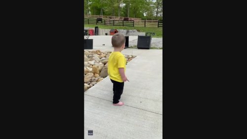 Protective Pooch Stops Toddler From Climbing Steps