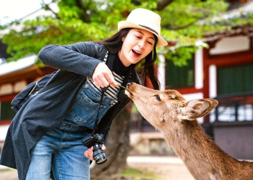 Navigating Nara, Japan