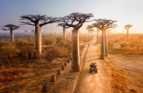 The Most Magnificent Trees In The World