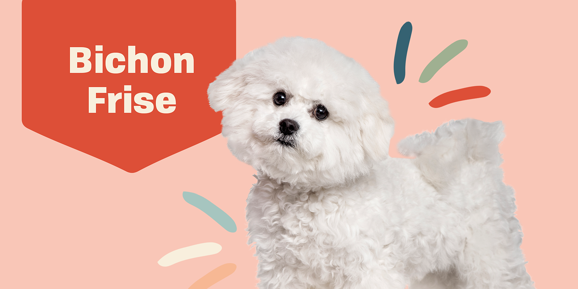 Meet the 11 Best Dog Breeds for Apartment Dwellers