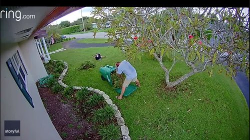 Florida Man Tumbles Into Wheelie Bin During Garden Cleanup