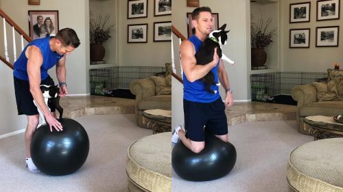 'Athletic Dog Flexes his Impressive Balancing & Jumping Skills'