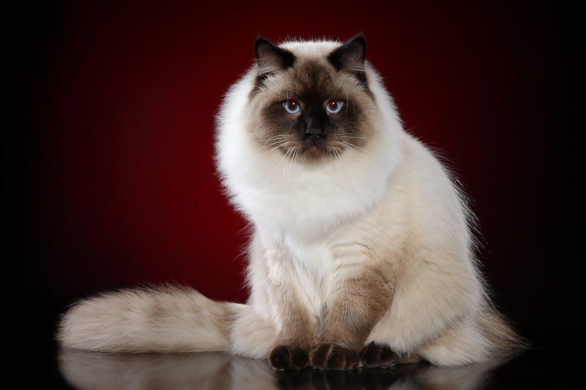 Popular Cat Personality Profiles