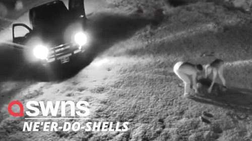 Would-be thieves crush a tortoise to death with their van as they try to flee in the US (RAW)