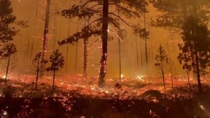 Harrowing Video Shows Firefighters Escaping Tamarack Wildfire Hellscape
