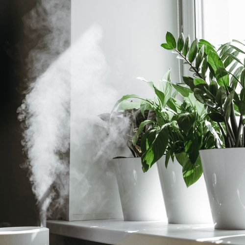 11 Tips To Keep Houseplants Happy All Winter