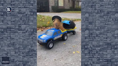 Trendy Guinea Pigs Cruise in Toy Truck and Boat