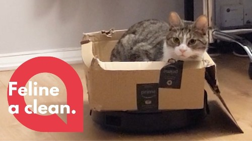 Adorable footage shows the moment a cute cat decided to go for a ride on his owners robotic vacuum cleaner (RAW)