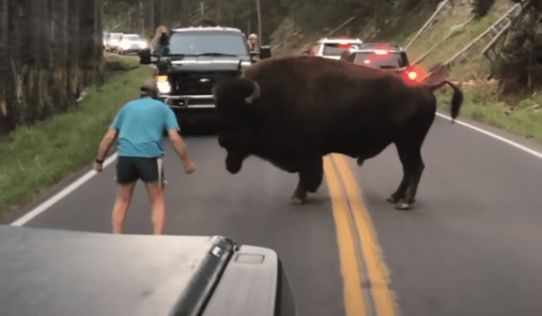10 Of The Dumbest Tourists To Ever Set Foot In A National Park
