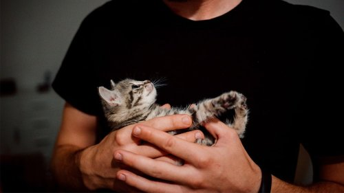 Study Suggests That Cats Can Be More Attached to Their Owners Than Dogs