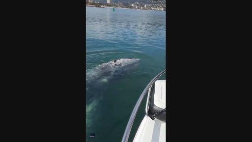 'Lost' Whale Swims Alongside Boat in French Riviera