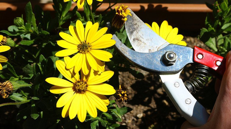 What Is Deadheading In The Garden And Is It A Must?