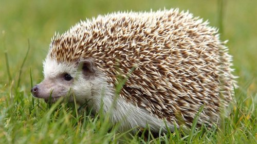 Hedgehogs: Adorable, But Do They Make Good Pets? — Plus Other Uncommon Pets