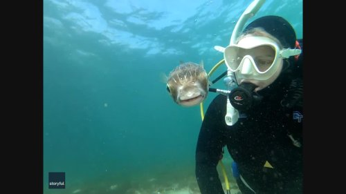 Pucker Up! Diver Snaps Adorable 'Selfie' With Pufferfish