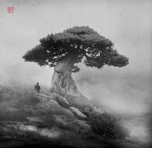 Big Popi - Wabi-Sabi cover image