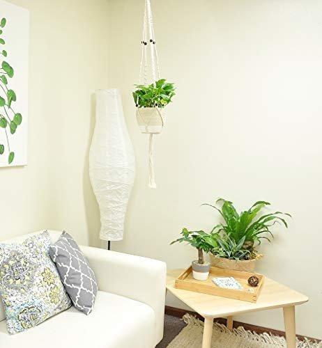 Golden Pothos indoor plant in stylish macrame plant hanger