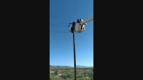 Linemen Save Bear Cub Who Climbed High-Voltage Utility Pole