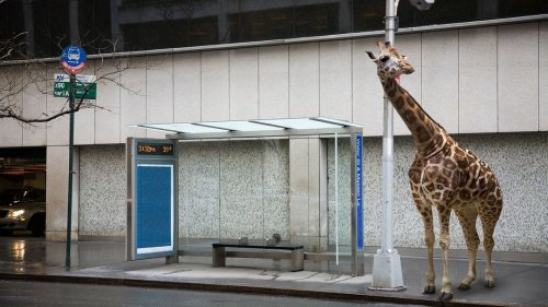Animals That Have Adapted To Urban Environments