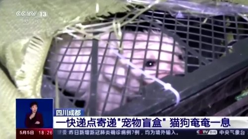 Chinese 'blind box' pet rescue sparks outrage