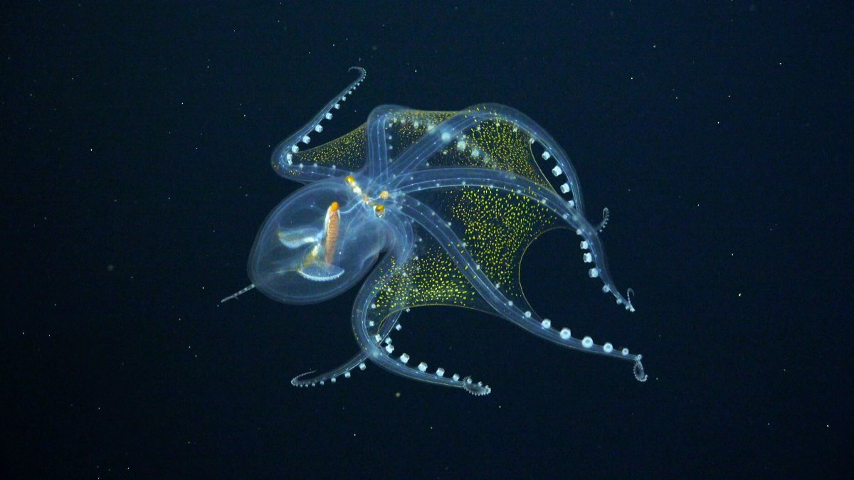 See Stunning Creatures Just Found in the Unexplored Deep Ocean