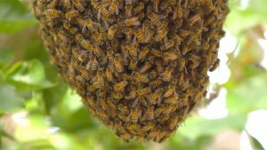 One Killed, Two Hospitalized After Bee Attack