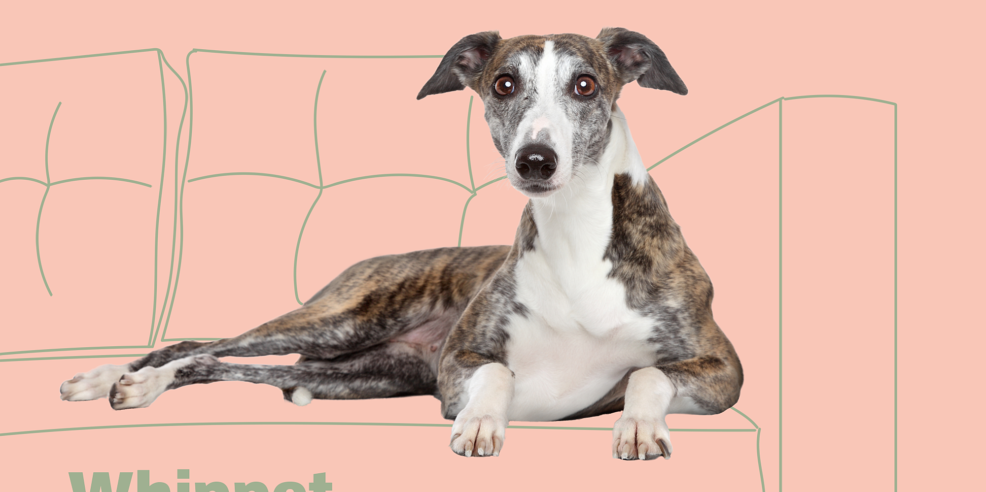 Look Alikes: Can You Tell the Differences in These 11 Sets of Dog Breeds?