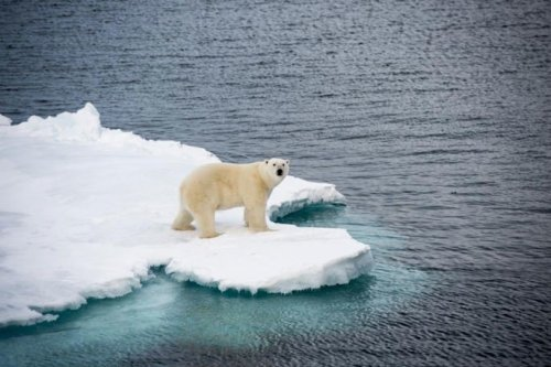 How climate denial blogs undermine scientific understanding