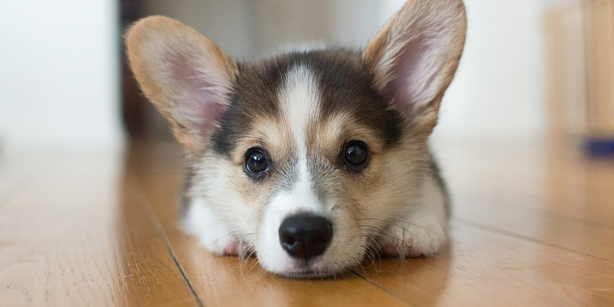 It's Corgi Week. Here Are Our 9 Best Stories About the Breed