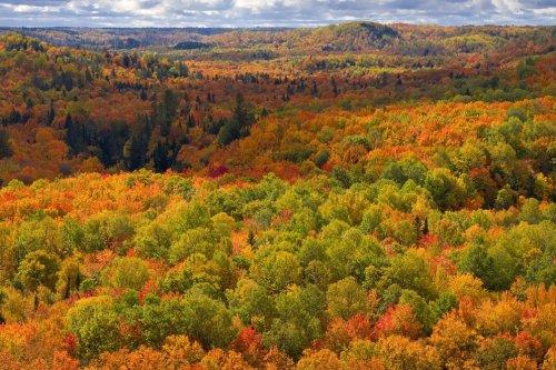 How to Capture Amazing Autumn Photographs