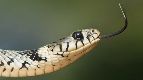 Snakes Are Hiding In Groceries, See The Video & Other Freaky Snake Behavior