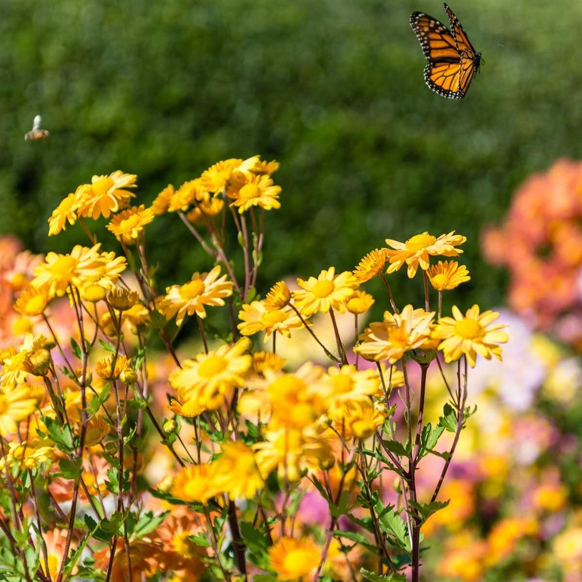 Pollinator-Friendly Lawn Care To Get Your Yard Buzzing