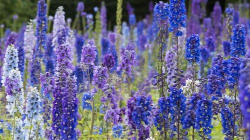 These are the jobs you should do in your garden this month