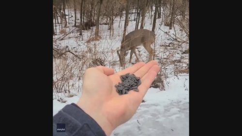 Deer Watch as Birds Feed From Ontario Man's Palm