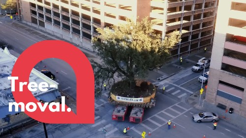 Watch this huge 300-year-old tree get transported through a city - RAW