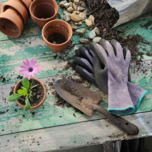 Gardening 101: No Green Thumb Required