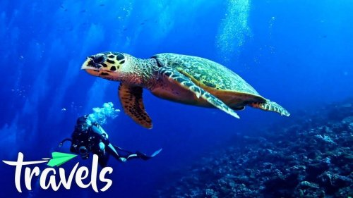 Top 10 Scuba Diving Destinations