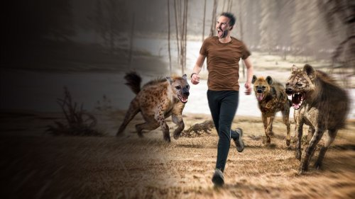 How to Survive a Hyena Attack