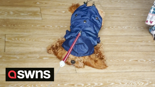 Hilarious video shows dog refusing to go for a walk in the rain