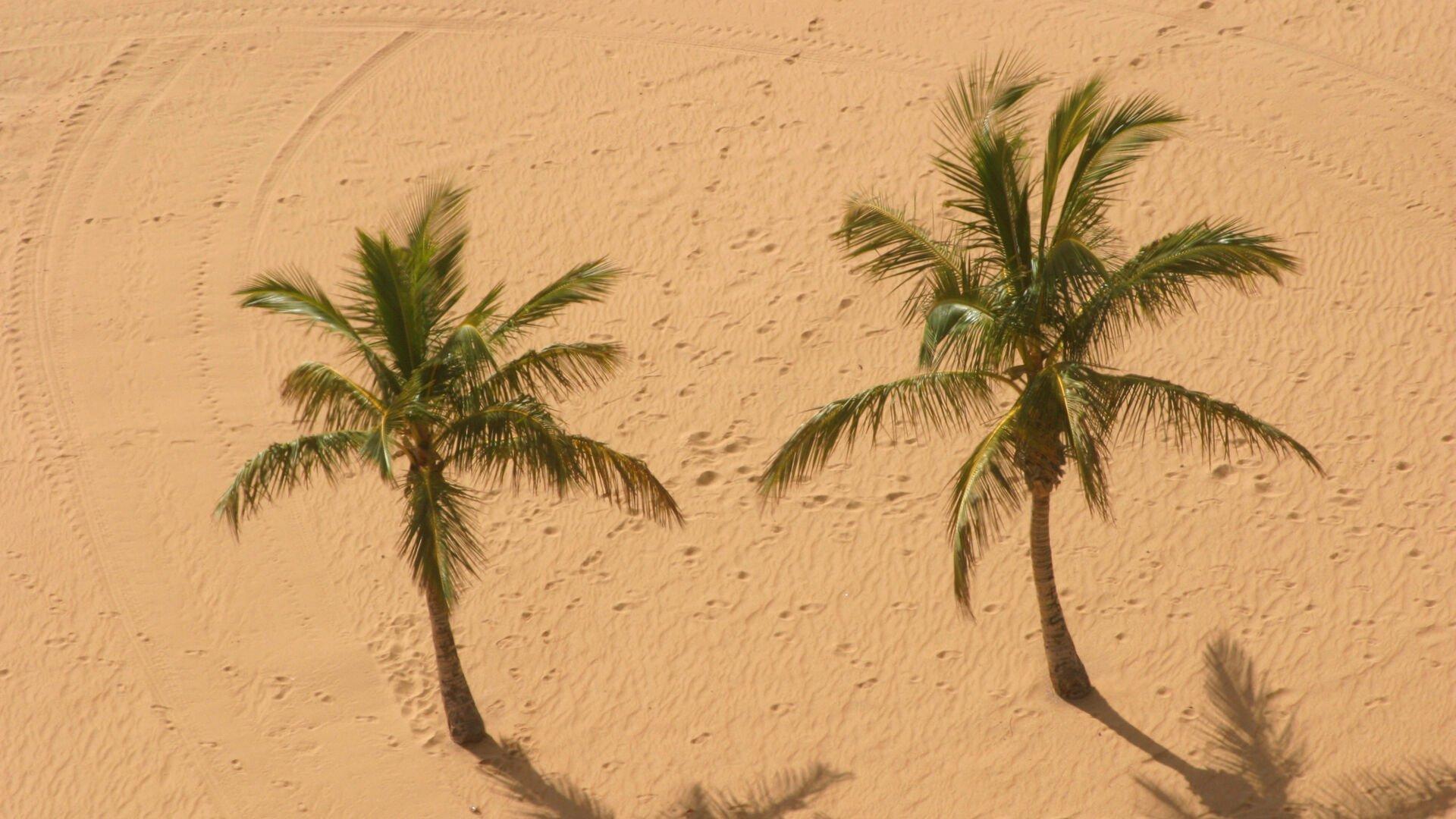 Kanaren-Reiseführer – Tipps für die schönsten Inseln