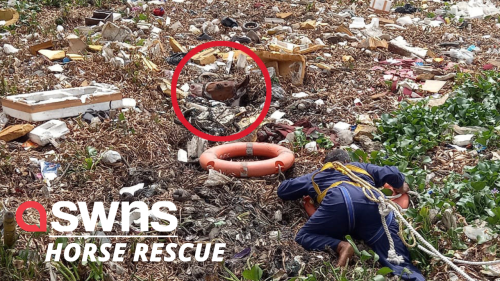 The terrifying moment a horse was rescued from a RUBBISH DUMP in India - RAW