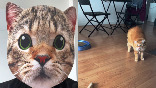 'Owner walks up to his pet cats while wearing a creepy cat mask *EPIC REACTIONS*'