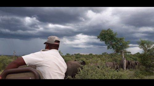 Elephant herd cross road