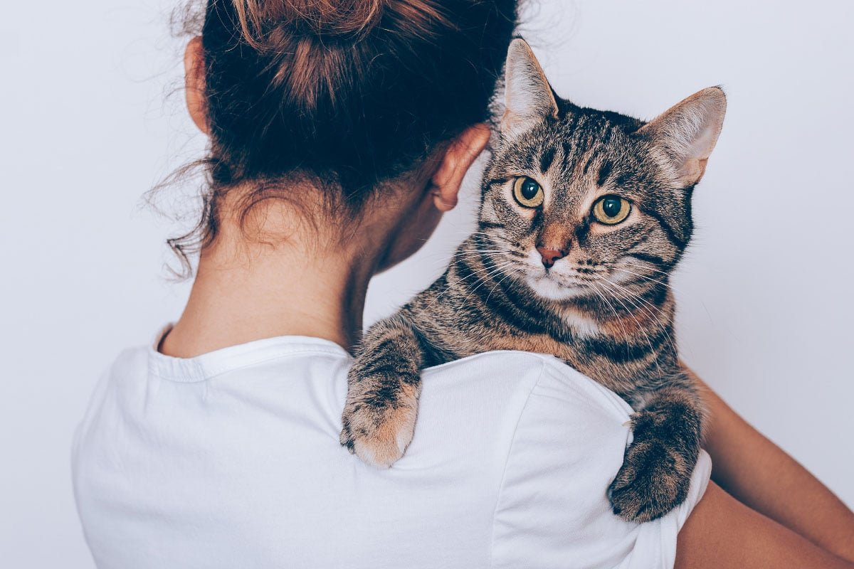10 Things Only Cat Lovers Care About