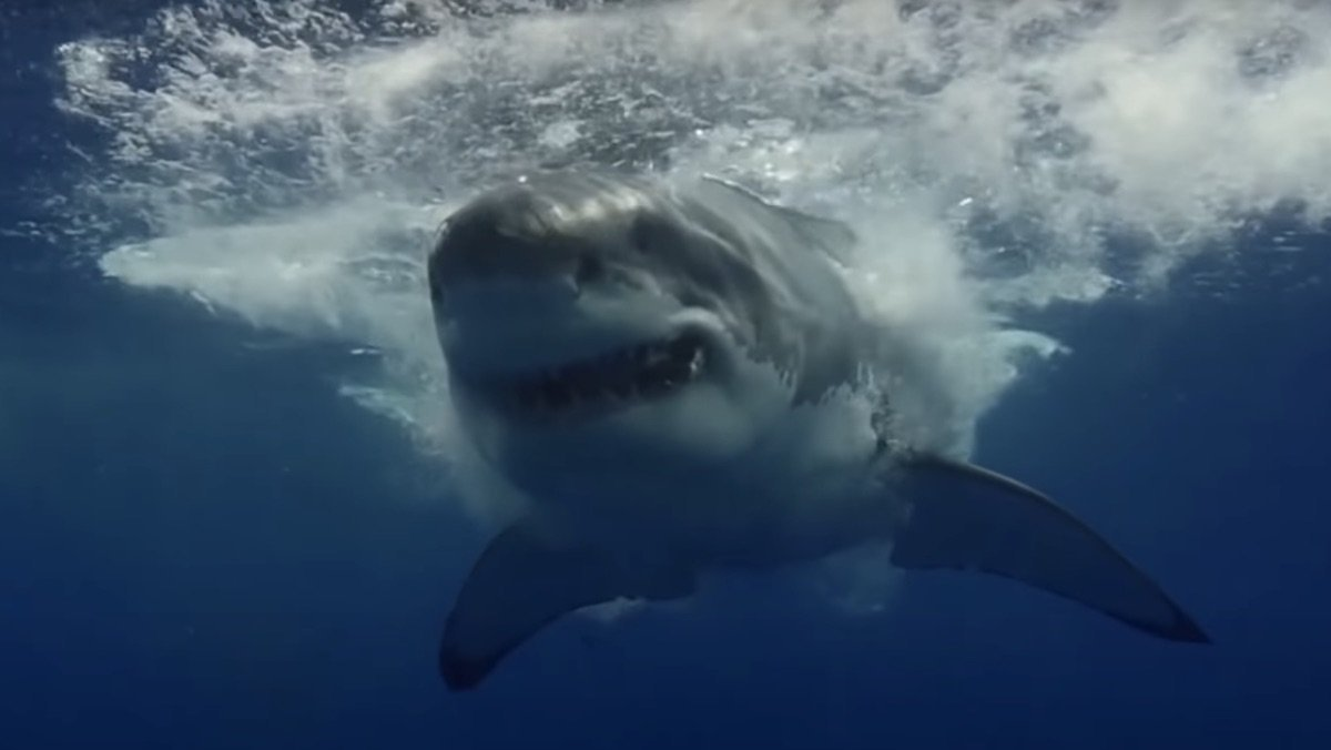 A Mysterious Mass Extinction Once Wiped Out 90% of Sharks