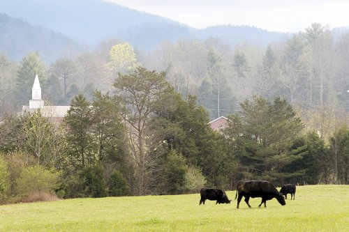 Tennessee won't incentivize COVID shots but pays to vax cows